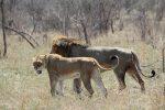 4days Lukimbi Safari Lodge - Kruger National Park from Johannesberg