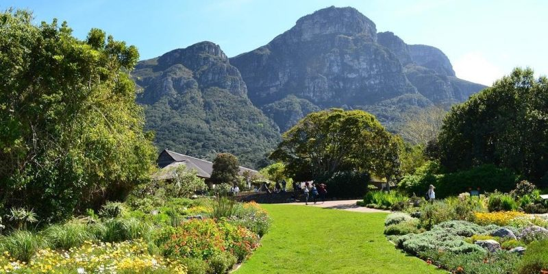 The Kirstenbosch Botanical Gardens: All You Need To Know
