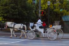 New Orleans Carriage Tours