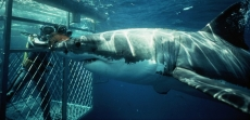 Shark Cage Diving Mossel Bay (Great Whites & Tours) Where To Book?
