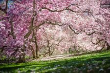 New York Botanical Garden Tickets (NYBG ticket or Sightseeing package)