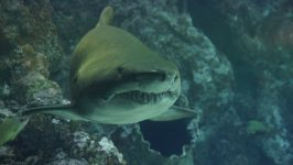 Gansbaai Shark Cage Diving Excursion from Cape Town
