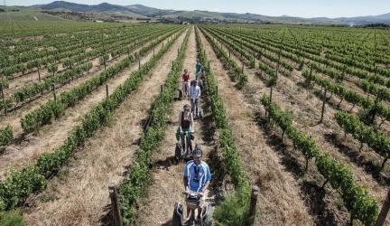Spier Vineyard Segway Tours