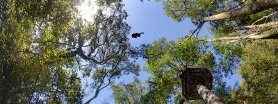 Tsitsikamma Canopy Tours, Specials & Prices