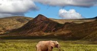 Aquila Game Reserve: Full Day Safari from Cape Town