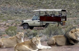Best Safari Tours Near Cape Town (Full-day & Overnight)