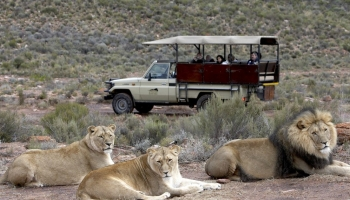 10 BEST Safari Tours Near Cape Town (Full-Day & Overnight)