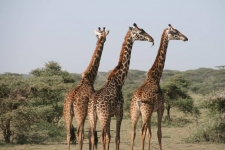 9 Countries for Best Safari in Africa and the World