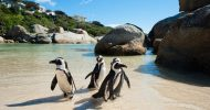 Cape Point and Penguin Explorer Full-Day Tour from Cape Town