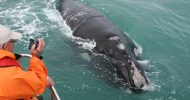 Cape Town: Whale Watching & Marine Big 5 Trip in...