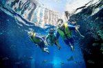 Dubai Atlantis Ultimate Snorkel Experience