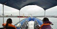 Durban: 1-Hour Boat Cruise from Wilson's Wharf