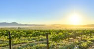 Franschhoek: Guided Bike Tour with Wine Tasting