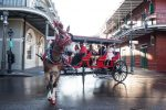 French Quarter & Marigny Neighborhood Carriage Ride