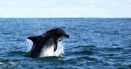 Gansbaai and Big 5 Sea Safari Full-Day Tour from Cape...