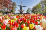 Guided Half-Day Trip from Amsterdam to the Keukenhof gardens +...