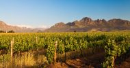 Half Day Winelands Tour