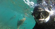 Hout Bay: Seal Snorkeling Experience
