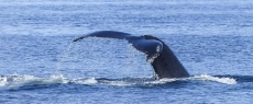 Whale Watching Tours In Cape Town