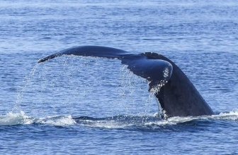7 TOP Whale Watching Tours In Cape Town