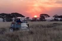 Best Safari Near Johannesburg 2019 (Game Lodges, Nature Reserves) – Tickets n Tour