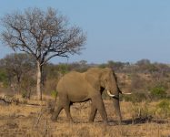 Kruger Tours From Johannesburg (Bus, Full Day & Accomodation)