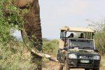 Kruger National Park Full Day Game Drive