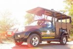 Kruger National Park Full-Day Safari from Hazyview