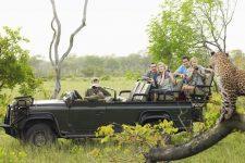 kruger-national-park-safari