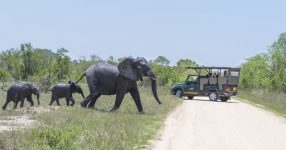 Kruger National Park Full Day Game Drives