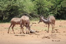 The Best 3 Day Kruger Safari Tours (from Joburg and Experience)