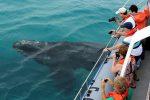 Marine Big 5 Safari from Cape Town