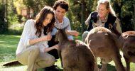 Melbourne: Puffing Billy Steam Train & Healesville Wildlife