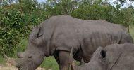 Nelspruit: Full-Day Kruger National Park Safari