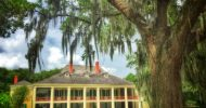 New Orleans: Plantation and Swamp Tour