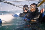 Private Great White Shark Cage Diving and Wine Tasting Experience...