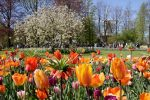 Skip the Line Keukenhof Admission Ticket with Transportation from Amsterdam