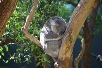 Taronga Zoo Tickets (All-day Pass, VIP Access) 2019