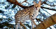 St Lucia Boat Safari and Emdoneni Wild Cat Day Tour