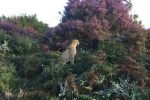 Sunrise - Cats in Conservation