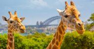 Taronga Zoo: Exclusive 90-Minute VIP Tour