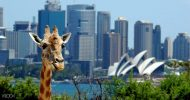 Taronga Zoo Sydney General Entry Ticket